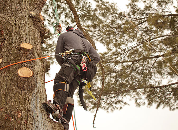 The Magnolia Tree Services LLC employee trimming a tree