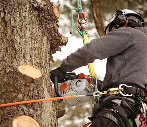 The Magnolia Tree Services LLC employee cutting a tree down