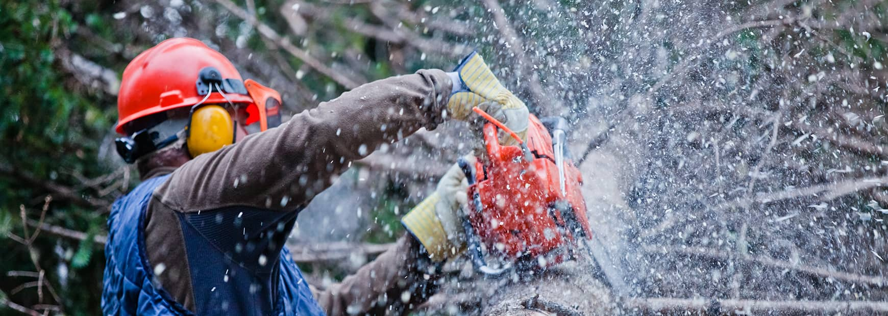 The Magnolia Tree Services LLC: Emergency tree removal in Stratford, Bridgeport and Milford